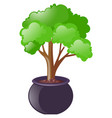 green tree growing in the pot vector image
