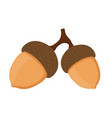 acorn oak nut seed cartoon flat style vector image
