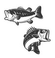 set of bass fish icons isolated on white vector image vector image