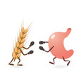 stomach and gluten source grain fighting vector image