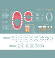 tooth anatomy chart orthodontist human teeth loss vector image