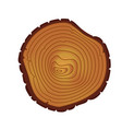 annual tree rings saw cut trunk vector image