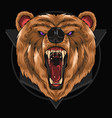 bear grizzly detail eps vector image vector image