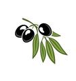 Black olives on a leafy twig vector image vector image