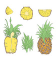 set of tropical fruits vector image vector image
