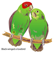 black-winged a lovebird vector image