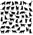 Cat and Activity Pet Animal Silhouettes vector image vector image