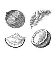 coconut and palm leaf a piece and a half of a nut vector image vector image