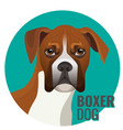 boxer dog full length isolated vector image vector image