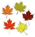 cartoon autumn leaf set vector image