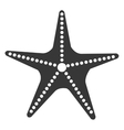 isolated beach starfish graphic vector image vector image