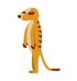 meerkat wild animal vector image vector image