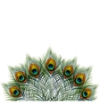 Beautiful peacock feathers on retro vector image