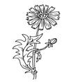 Field flower cornflower isolated on white backgrou vector image