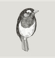 graphic hand drawn robin bird on retro vector image vector image