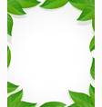 leaves frame green decoration vector image vector image