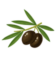 olive black vector image vector image