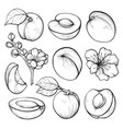 apricot hand drawn set summer fruit vitamin vector image vector image