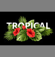 exotic tropical hibiscus flowers and monstera vector image vector image