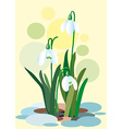 Snowdrops on a abstract background Spring of vector image vector image