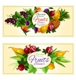 Sweet summer fruits banners for food design vector image vector image