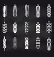 wheat ears on chalkboard vector image