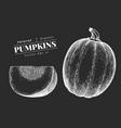 pumpkin hand drawn vegetable on chalk board vector image vector image