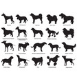 set of dogs silhouettes-3 vector image vector image