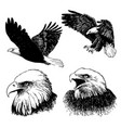 set of eagle doodle hand drawn vector image