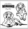 weimaraner - set isolated vector image vector image