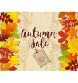 autumn sale fall sale design can be used vector image vector image