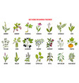 best medicinal herbs to treat diarrhea vector image vector image