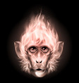 Monkey fire head vector image