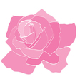 Rose Pink vector image vector image