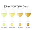 White wine color chart Hand drawn wine glasses vector image vector image