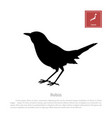 black silhouette of a japanese robin vector image vector image