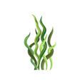 underwater seaweed aquatic marine algae plant vector image
