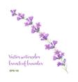 watercolor branch lavender vector image vector image