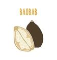 Baobab superfood vector image vector image