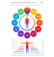 endocannabinoid and body systems vertical vector image vector image