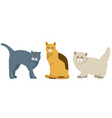 set of 3 cute cats vector image