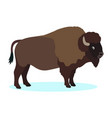 wild brown bison buffalo icon isolated on white vector image