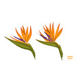 isolated tropical flowers strelitzia image vector image