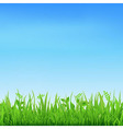 Sale Banner With Grass vector image vector image