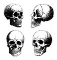 set skull doodle hand drawn vector image