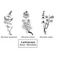 hand drawn set of botanical vector image
