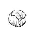 cabbage hand drawn sketch icon vector image vector image