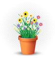 flowers grows in flowerpot on transparent vector image