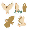 set barn owls isolated on a white background