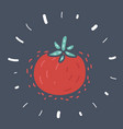 tomato isolated vegetables vector image vector image
